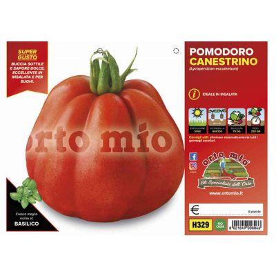 Pomodoro Canestrino Di Lucca H329