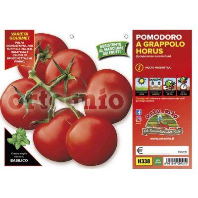 Pomodoro Tondo Grappolo Horus H338