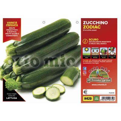 Zucchino Scuro Var. Zodiac