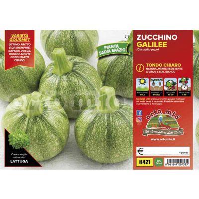 Zucchino Tondo Chiaro Galilée