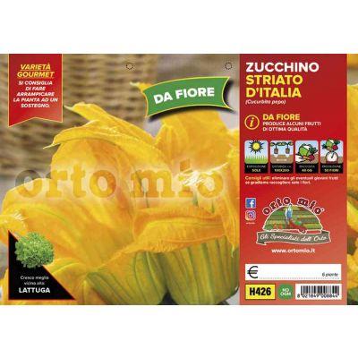 Zucchino Da Fiore Striato D'Italia