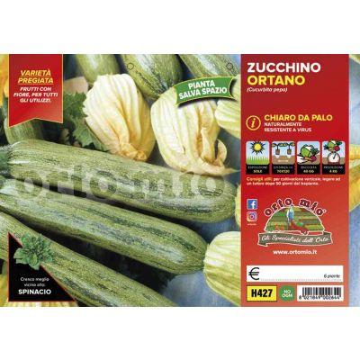 Zucchino Chiaro Da Palo Ortano