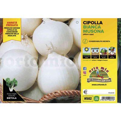 Cipolle Bianca Tonda Musona H502