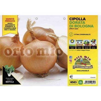 Cipolle Dorata Di Bologna H503