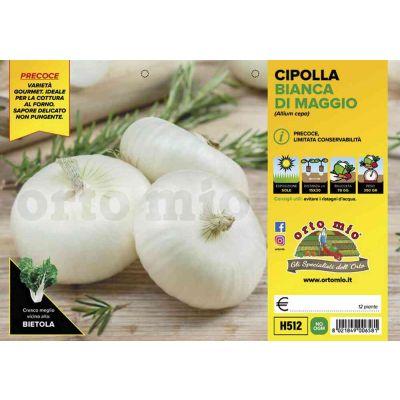Cipolle Bianca Piatta Maggio H512