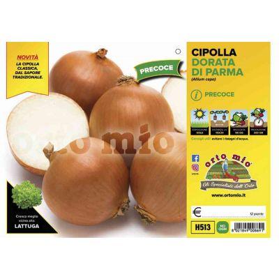Cipolle Dorata Di Parma H513