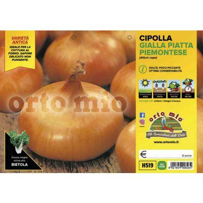 Cipolle Gialla Piatta H519