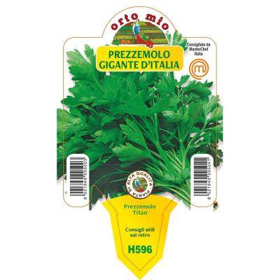 Prezzemolo Gig Italia Titaná in vaso 10 H596