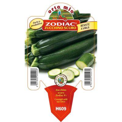 Zucchino Scuro Zodiac in vaso 10
