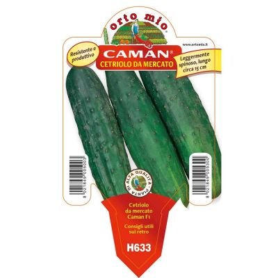 Cetriolo Mercato Caman in vaso 10 H633