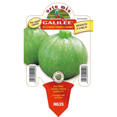 Zucchino Tondo Galilée in vaso 10