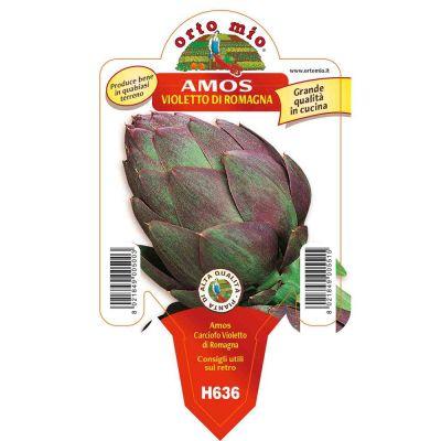 Carciofo Violetto Amos Opera in vaso 10