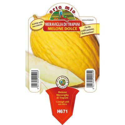 Melone Giallo Meraviglia Trapani in vaso 10 H671