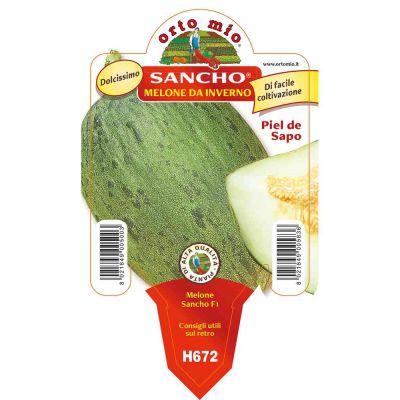 Melone Verde Sancho Beldor in vaso 10 H672