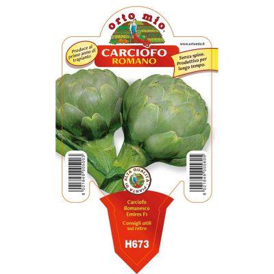 Carciofo Romano Verde Adamo in vaso 10 H673