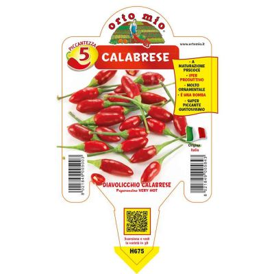 Peperoncini Diavolicchio Italico