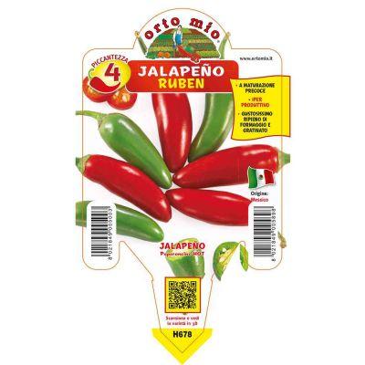 Peperoncini Messicano Jalapeño Ruben