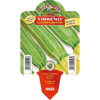Zucchino Costoluto Fiorentino in vaso 10