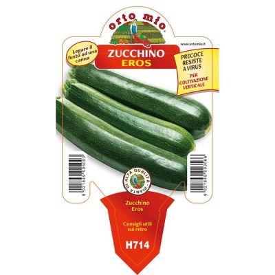 Zucchino Scuro Da Palo Eros in vaso 10