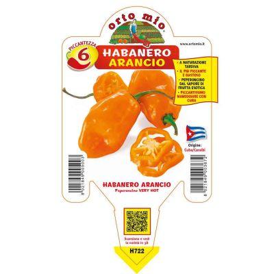 Peperoncini Habanero Arancio