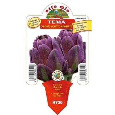 Carciofo Violetto Tema Rifiorente in vaso 10 H730