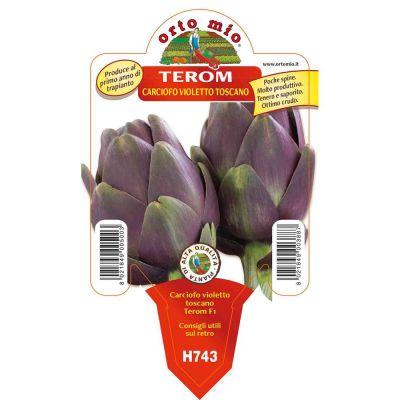 Carciofo Violetto Toscano Terom in vaso 10
