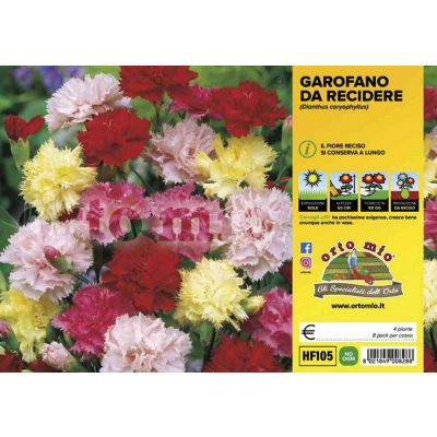 Fiori Recidere Garofano