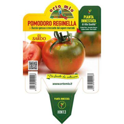 Pomodoro Innestato Sardo Reginella in vaso 14 HIN13