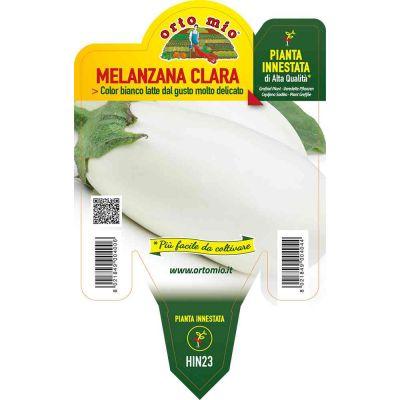 Melanzana Innestato Bianca Clara