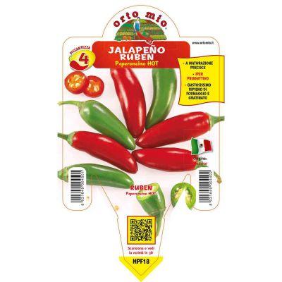 Peperoncino Jalape Hot in vaso 14 HPF18
