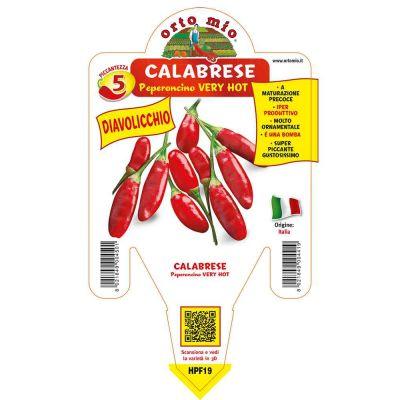 Peperoncino Diavolicchio Calabrese Very Hot in vaso 14 HPF19