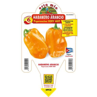 Peperoncino Habanero Arancione Very Hot in vaso 14