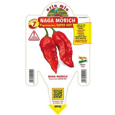 Peperoncino Naga Morich Rosso Super Hot in vaso 14 HPF26