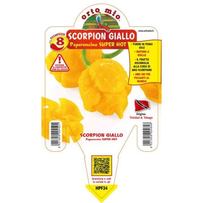 Peperoncino Trinid Scorpion Giallo Super Hot in vaso 14