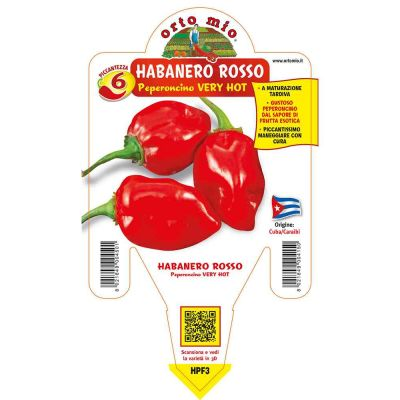 Peperoncino Habanero Rosso Very Hot in vaso 14