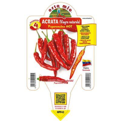 Peperoncino Acrata Hot in vaso 14 HPF43
