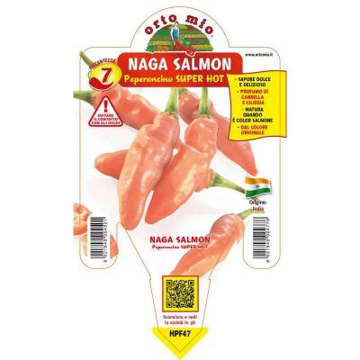 Peperoncino Naga Morich Salmone Super Hot in vaso 14 HPF47