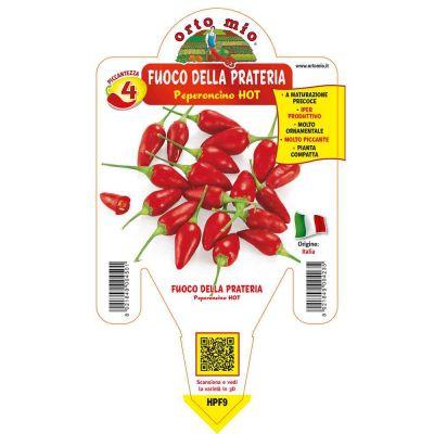 Peperoncino Fuocoprateria Hot in vaso 14 HPF9