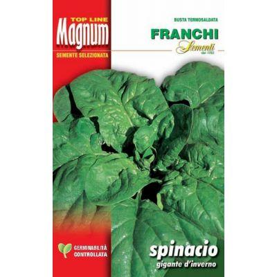 Spinac. gigante invierno busta Magnum