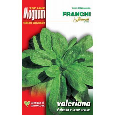 Valeriana d'olanda s.g. busta Magnum