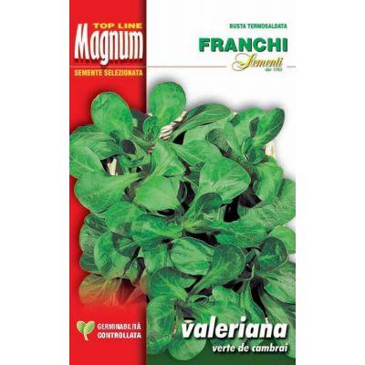 Valeriana v.cambrai busta Magnum