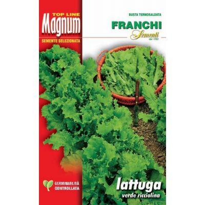 Lattuga verde ricciolina busta Magnum