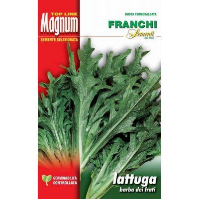 Lattuga radichet/barb.fr. busta Magnum