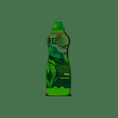Piante verdi plus