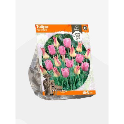 Bulbi Tulipani Pastel blend x 5