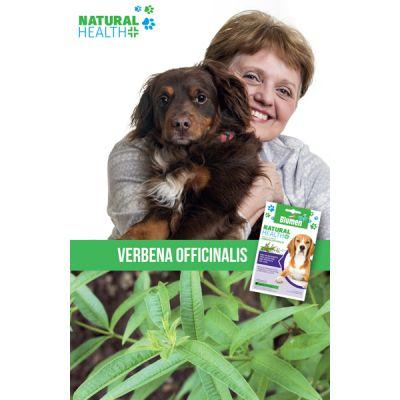 Verbena Cane