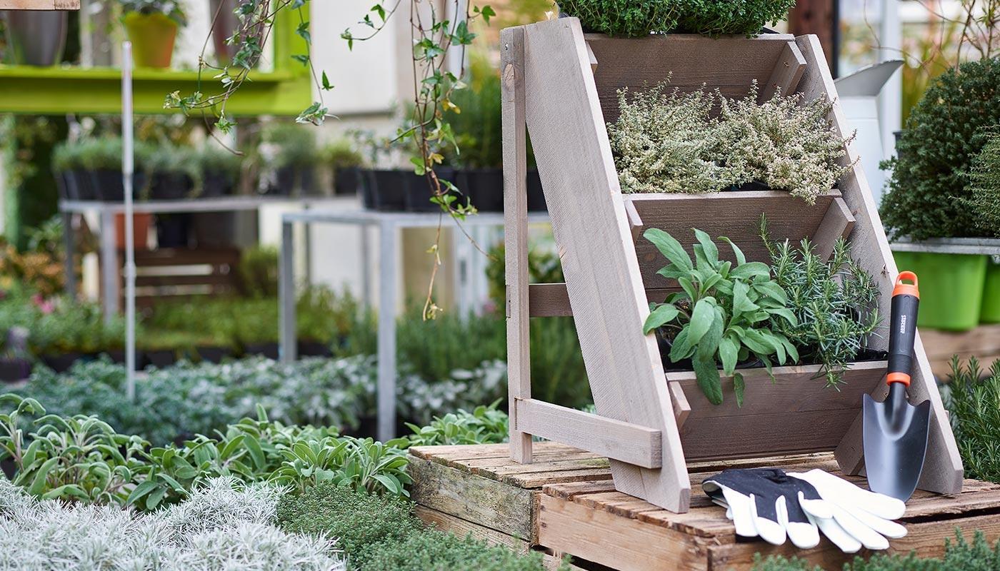 Coltivare In Casa Piante Aromatiche orto di aromatiche | agricolashop