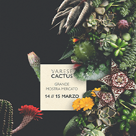 varese-cactus2020