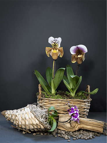 guida alle orchidee